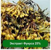 Оптом и розницу Экстракт Фукуса 25%,  1 кг